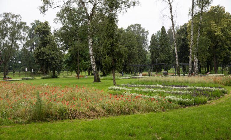 Metropolia pomoże założyć łąkę kwietną